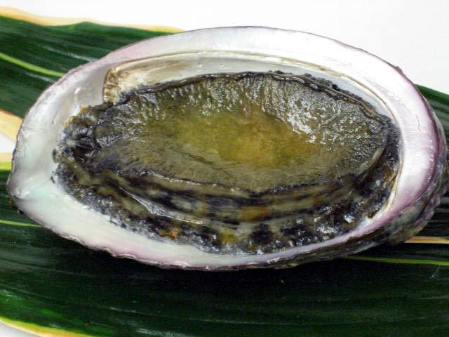 Морское ушко