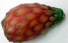 Муляж кактусовой груши (112/ 62 мм)