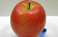 Муляж яблока Фуджи (76-82 мм)