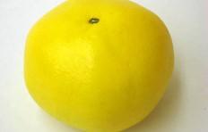 Муляж грейпфрута (90/ 105 мм)