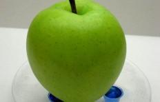 Муляж зеленого яблока (100/ 93 мм)
