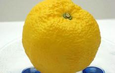 Муляж лимона (70/ 60 мм)