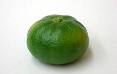 Муляж мандарина (45/ 65 мм)