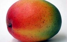 Муляж мексиканского манго (110/ 93 мм)