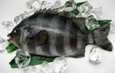 Муляж рыбы-попугай (31 см)-1