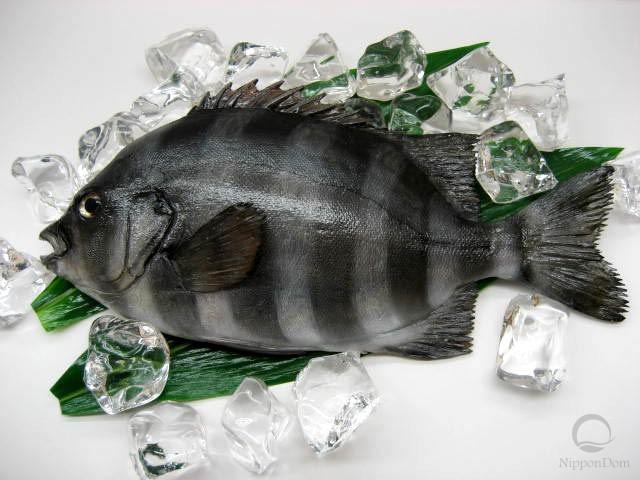 Рыба-попугай (31 см)-1