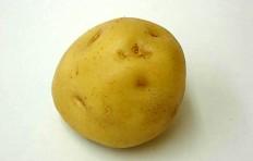 Муляж картофеля (70/ 75 мм)