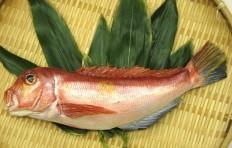 Макет морского красного окуня (30 см)
