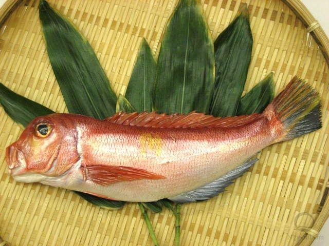 Морской красный окунь (30 см)