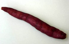 Муляж сладкого картофеля (295/ 40 мм)